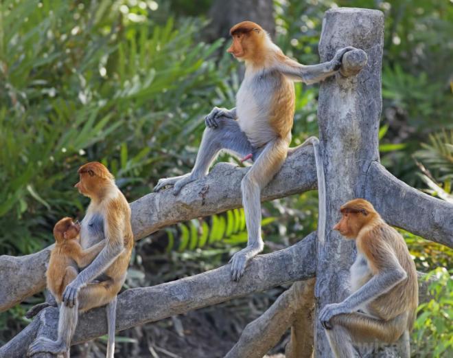monkeys-on-tree