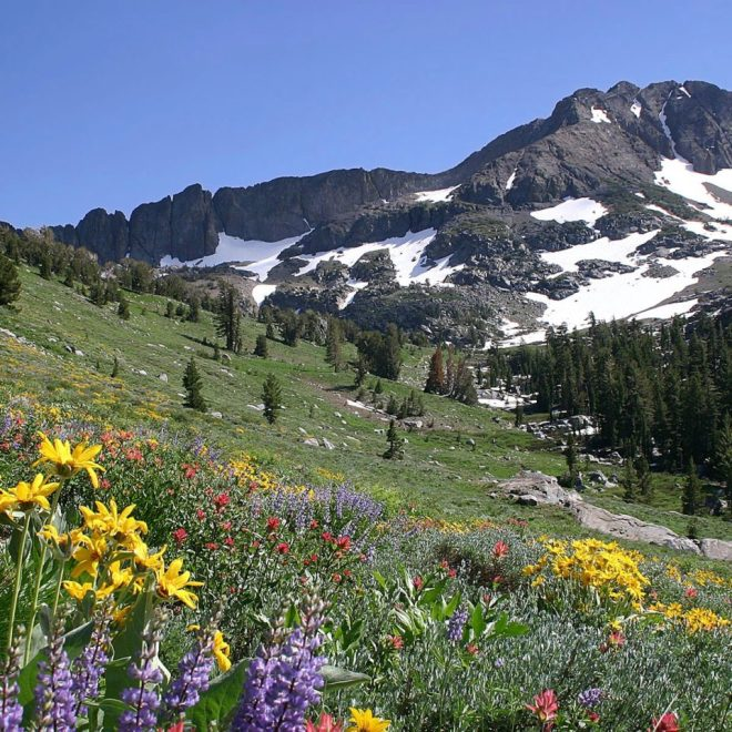 Spring-Mountain-Landscape-Free-Wallpaper-HD-960x960